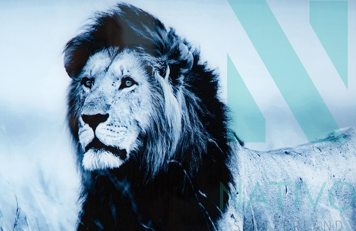 Quadri ticino lion 80 cm nativo negozio mobili svizzera