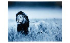 Designer Bild LION 80 cm
