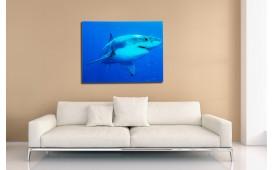Tableau design SHARK 80 cm